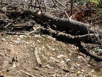Spring litter near Plummers Landing