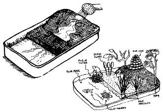 mini wetland in a pan