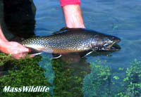 man holding brook trout