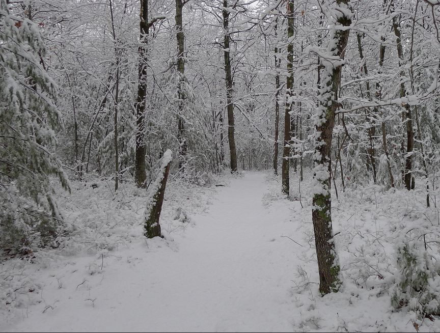 Snowy Trail, Hassanamessit Woods